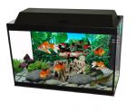 Aquarium Sets